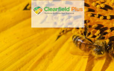 CLEARFIELD PLUS®